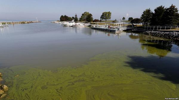 VOA慢速英语:研究人员表示气候变暖会使危险的藻类迅速传播