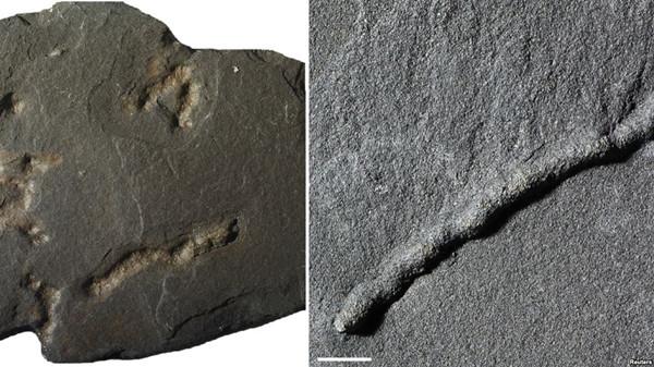 VOA慢速英语:21亿年前,地球存在最早的可移动的生物!